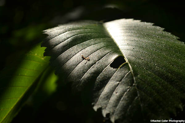 dramatic leaf rachel cater photography
