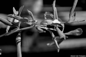 monochrome stem rachel cater photography