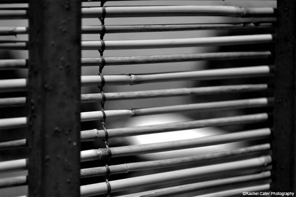 monochrome blind rachel cater photography