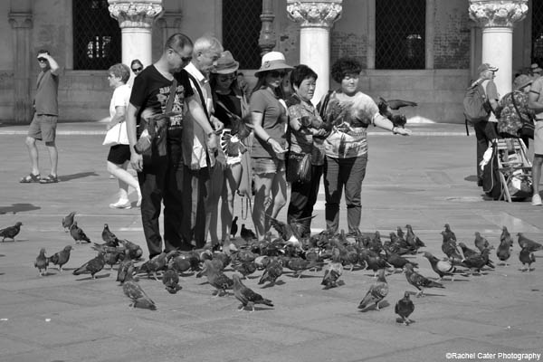 pigeon people rachel cater photography