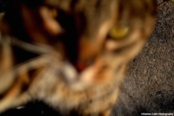 blurry cat rachel cater photography