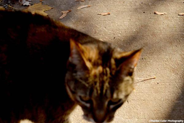 Cat in toronto Rachel Cater Photography