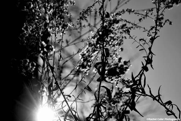 monochrome nature rachel cater photography