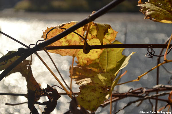 nature leafs at river rachel cater photography