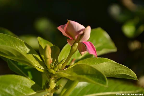 pink flower rachel cater photography