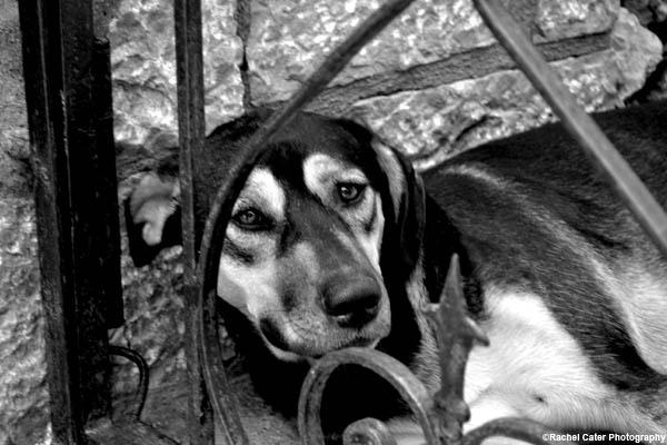 Sad dog in Capri Rachel Cater Photography