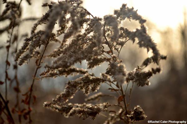 dusky flower rachel cater photography