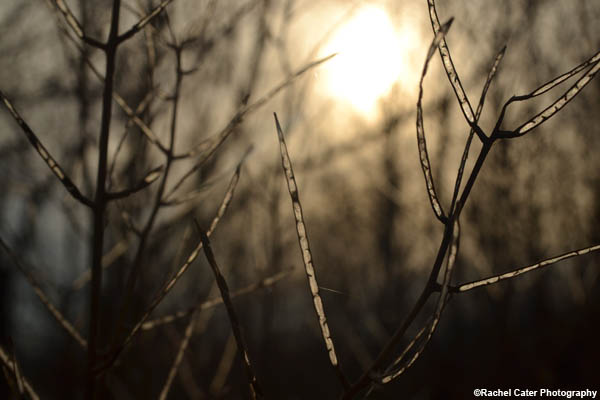 Nature's Glow Rachel Cater Photography
