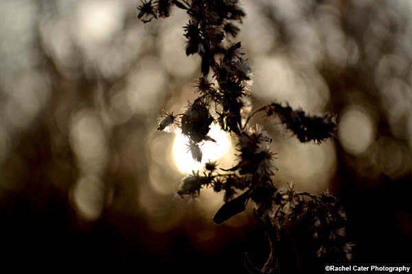 Spotlight in Nature Rachel Cater Photography