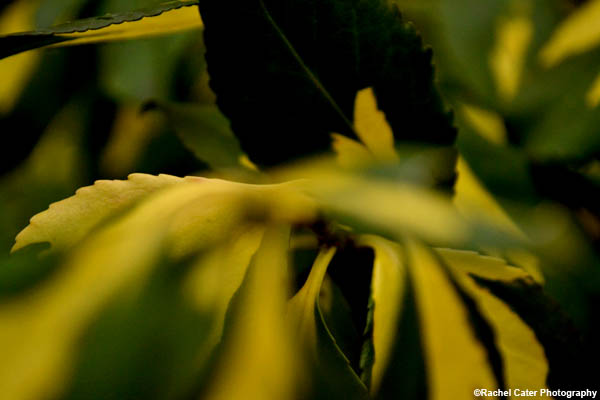 Swirl leaf rachel cater photography