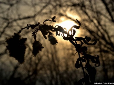 delicate-flower-silhouette-rachel-cater-photography