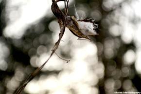 flowers and light diamonds rachel cater photography