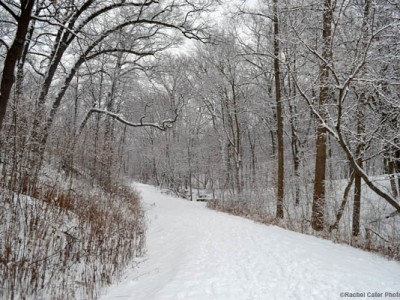 freshly blanketed in park snow rachel cater photography