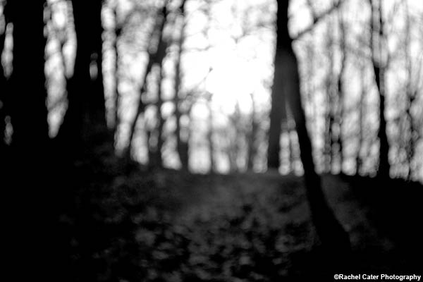 Mystical Nature Rachel Cater Photography