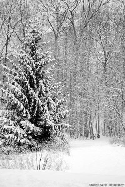 snowy-park-rachel-cater-photography