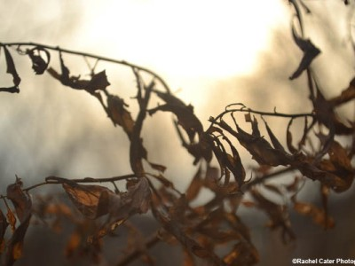 Tangled Branches Rachel Cater Photography
