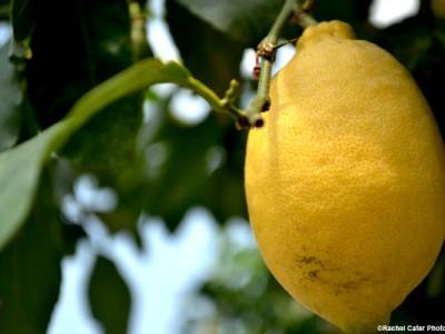 lemon-rachel-cater-photography