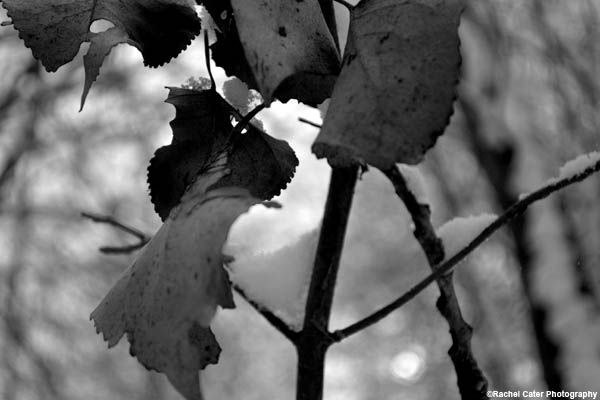 monochrome-leaf-bunch-rachel-cater-photography