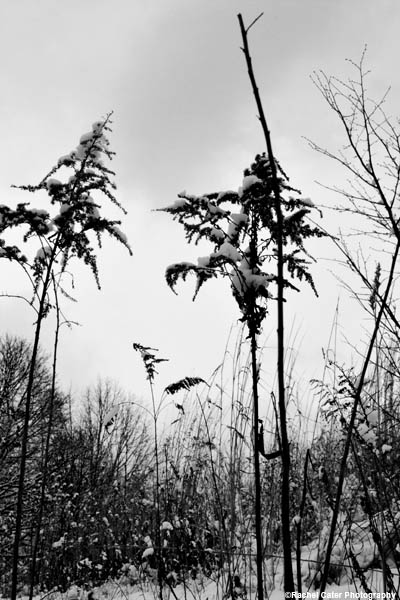 Monochrome Winter Nature Scene Rachel Cater Photography