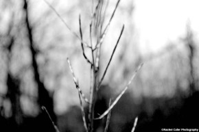 monochrome-plant-rachel-cater-photography