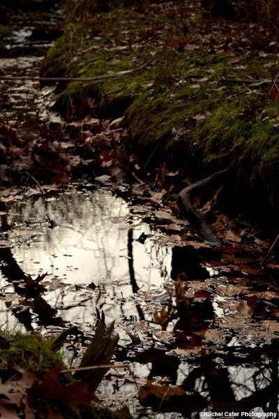 murkey pond rachel-cater-photography