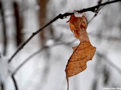 snowy autumn leaf rachel cater photography