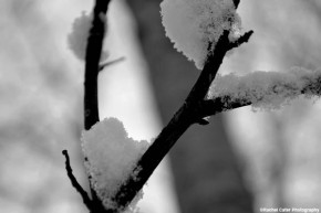 snowy-branch-rachel-cater-photography