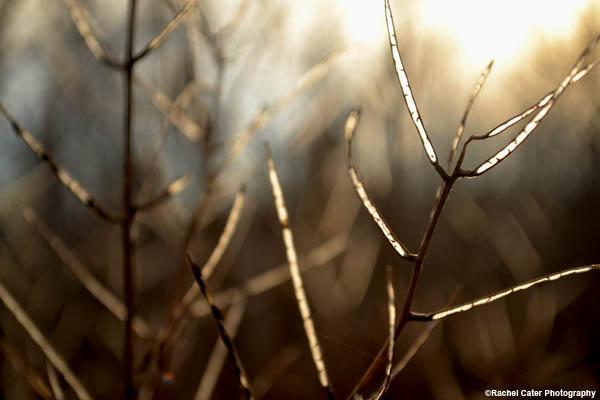 sunset-glow-rachel-cater-photography
