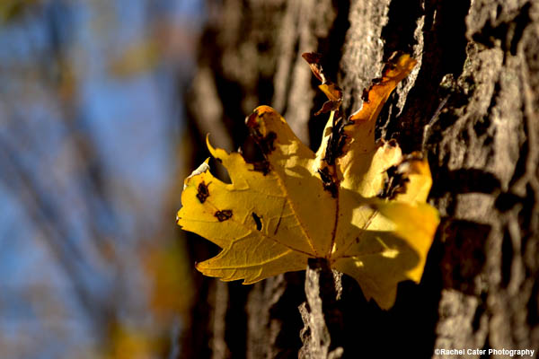 attached-leaf-to-tree-rachel-cater-photography