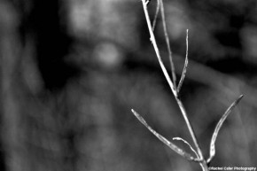 monochrome-branch-rachel-cater-photography