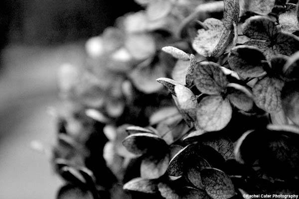 monochrome-floral-bush-rachel-cater-photography-