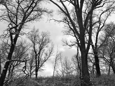 monochrome-snowy-scene-rachel-cater-photography