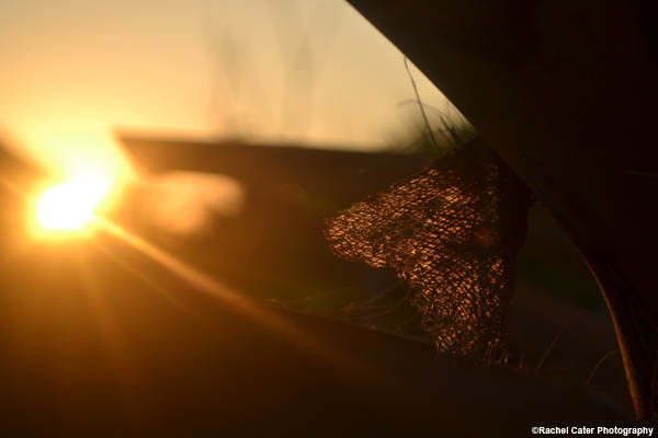 leaf-at-sunset-rachel-cater-photography