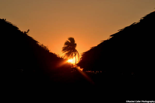 palm-tree-cuba-rachel-cater-photography