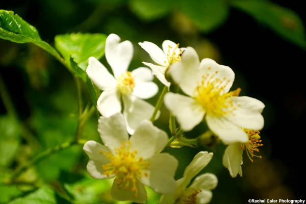 flowers-in-hamilton-rachel-cater-photography