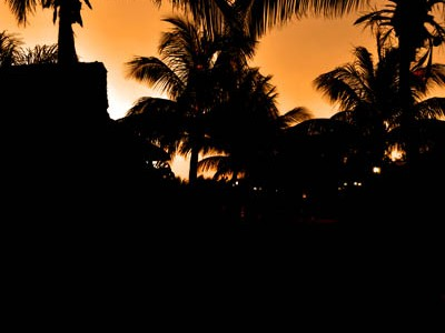 palm-tree-silhouettte-rachel-cater-photography
