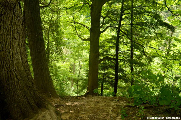 lush-trees-rachel-cater-photography