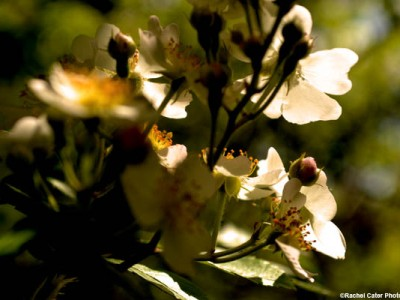 dramatic-flowers-rachel-cater-photography