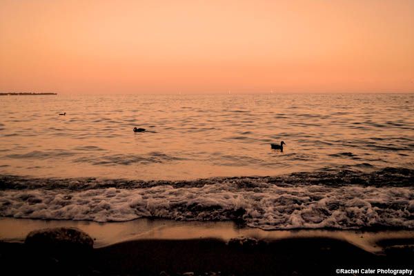 ducks-at-sunset-rachel-cater-photography