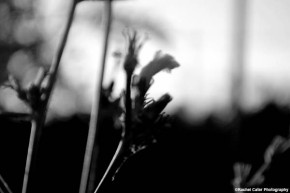 monochrome-nature-rachel-cater-photography