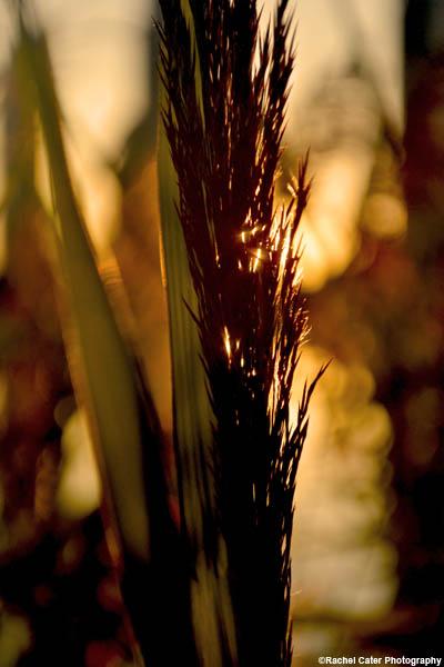 plant-at-sunset-rachel-cater-photograph