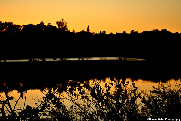 sunset in high park rachel cater photography