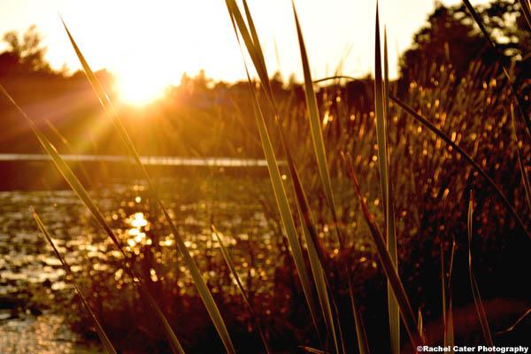 golden-glow-rachel-cater-photography