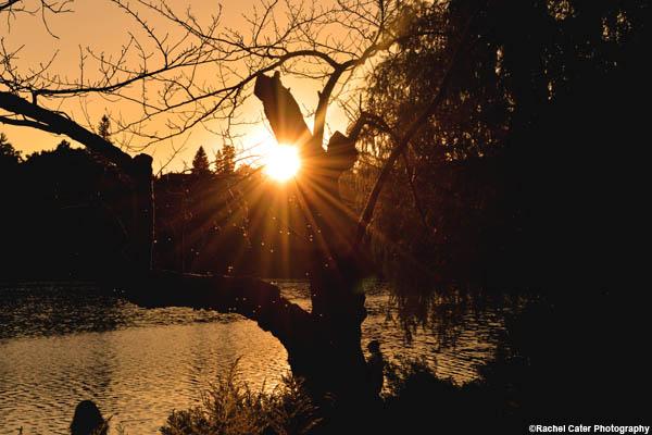 sunlight through trees rachel cater photography