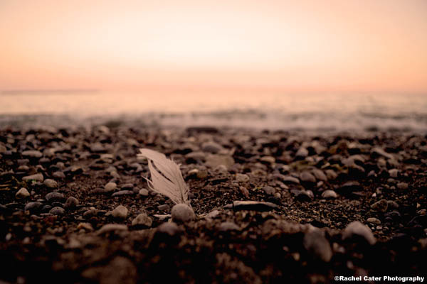 feather-at-sunset-rachel-cater-photography