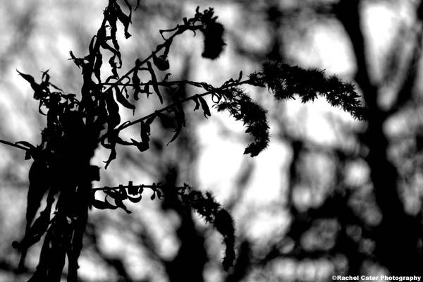 plants in winter toronto rachel cater photography