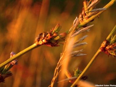 plants at dusk Rachel Cater Photography