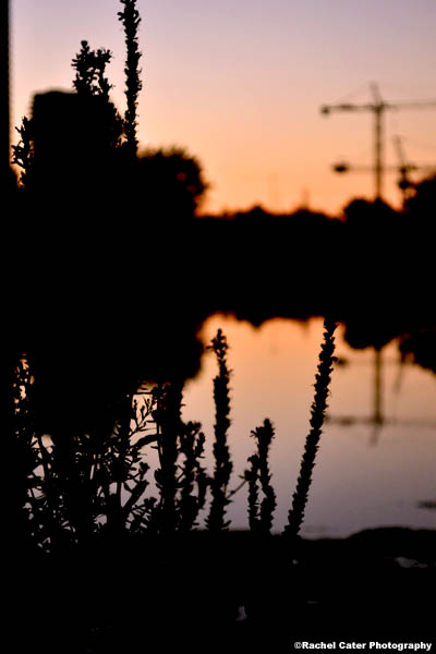 silhouettes at dusk Rachel Cater Photography