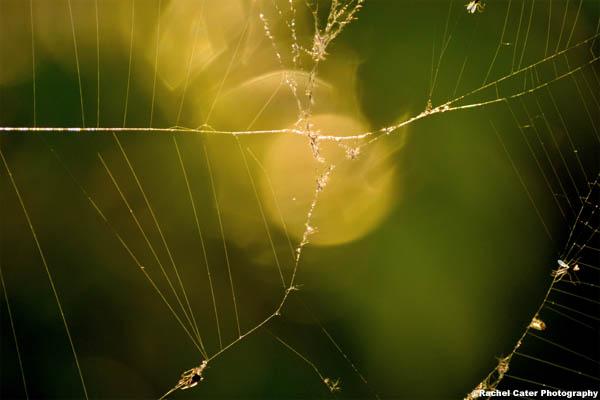 Web Rachel Cater Photography