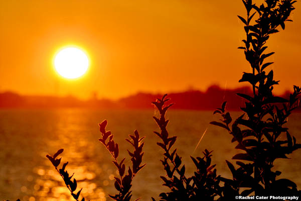 Golden Morning Sun Rise Dawn Rachel Cater Photography